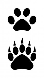 vector illustration of bear claw and paw